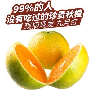 秭归脐橙—九月红现摘现发不催熟不打蜡(包邮)